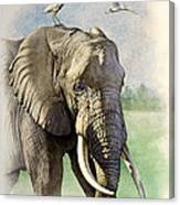Amboseli Morning   Canvas Print