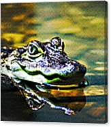 American Alligator 1 Canvas Print