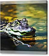 American Alligator 2 Canvas Print