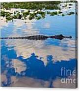 American Alligator Swimming Through The Clouds Canvas Print
