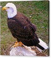 American Bald Eagle 1 Canvas Print