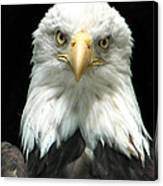 American Bald Eagle 2 Canvas Print