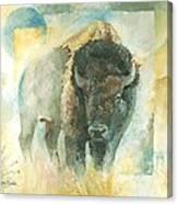 American Bison Buffalo Bull Canvas Print
