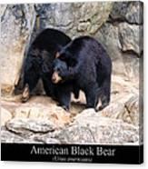 American Black Bear  Canvas Print