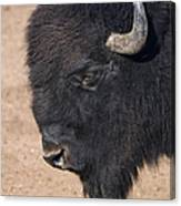 American Buffalo No.2 Canvas Print