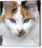 American Calico Cat Portrait Canvas Print