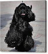 American Cocker Spaniel In Action Canvas Print
