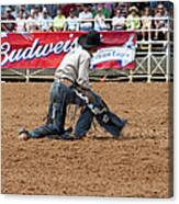 American Cowboy Thrown From A  Bucking Rodeo Bronc Canvas Print