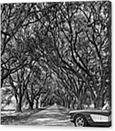 American Dream Drive 2 Bw Canvas Print
