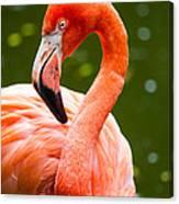 American Flamingo Jacksonville Zoo Florida Canvas Print