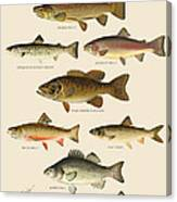 American Game Fish Canvas Print