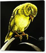 American Gold Finch Canvas Print