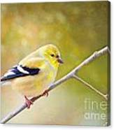 American Goldfinch - Digital Paint Canvas Print