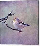American Goldfinch 2 Canvas Print