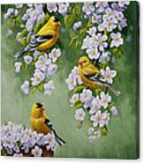 American Goldfinches And Apple Blossoms Canvas Print