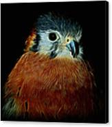 American Kestrel Digital Art Canvas Print
