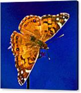American Lady Butterfly Blue Square Canvas Print