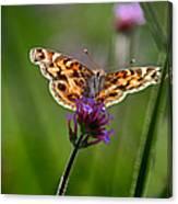 American Lady Butterfly In Garden Canvas Print