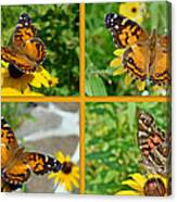 American Lady Butterfly - Vanessa Virginiensis Canvas Print