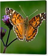 American Lady Butterfly With Green Background Canvas Print