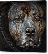 American Mastiff Canvas Print