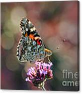American Painted Lady Butterfly 2014 Canvas Print