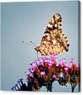 American Painted Lady Butterfly Blue Background Canvas Print