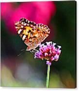 American Painted Lady Butterfly Pink Canvas Print