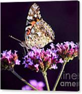 American Painted Lady Butterfly Purple Background Canvas Print