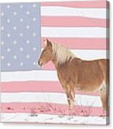 American Palomino Canvas Print