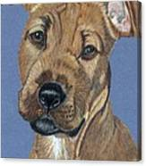 American Pit Bull Terrier Puppy Canvas Print