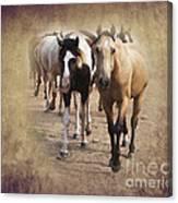 American Quarter Horse Herd Canvas Print