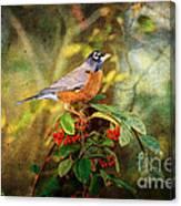 American Robin - Harbinger Of Spring Canvas Print