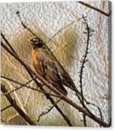 American Robin On A Branch Canvas Print