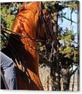 American Saddlebred Horse Head Shot Canvas Print