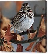 American Tree Sparrow No 2 Canvas Print