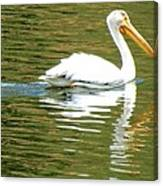 American White Pelican On A Lake Canvas Print