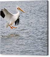 American White Pelican Water Landing 2 Canvas Print