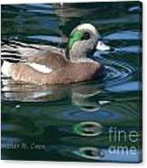 American Widgeon Duck Canvas Print