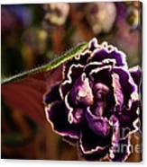 Amethyst African Violet Canvas Print