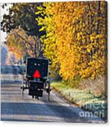 Amish Buggy And Yellow Leaves Canvas Print