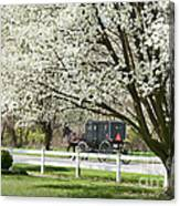Amish Buggy Fowering Tree Canvas Print