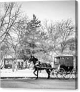 Amish Buggy Canvas Print