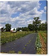 Amish Farm And Garden Canvas Print