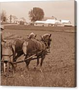Amish Farmer Canvas Print