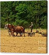 Amish Farmer Tilling The Fields Canvas Print