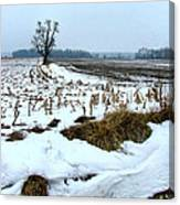 Amish Field In Winter Canvas Print