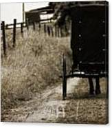Amish Horse And Buggy Canvas Print