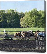 Amish Plowing Field Canvas Print
