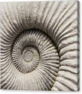 Ammonites Fossil Shell Canvas Print